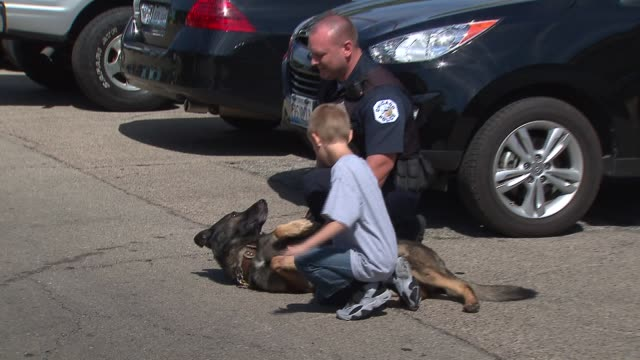 vídeos de stock, filmes e b-roll de the chicago police canine unit held a fundraiser to buy bulletproof vests for their k9 companions police canine rolls on the ground on september 14... - à prova de balas
