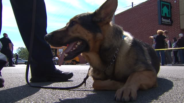 The Chicago Police Canine Unit held a fundraiser to buy bulletproof vests for their k9 companions Police Canine On The Ground on September 14 2013 in...
