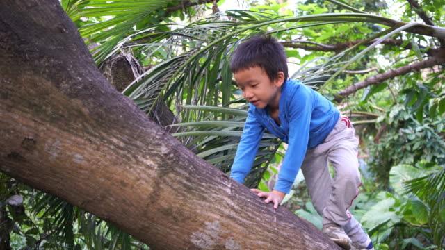vidéos et rushes de l'enfant sur un arbre - vidéo portrait