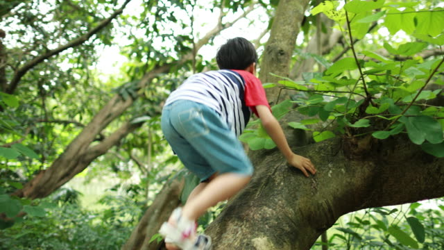 the child on a tree - clambering stock videos & royalty-free footage