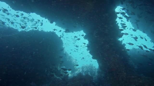 das schornstein unterwasserhöhlensystem thailand - auftauchen stock-videos und b-roll-filmmaterial