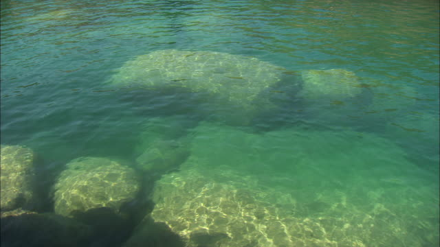 the clear water of lake malawi ripples in the sunlight. - 巨礫点の映像素材/bロール