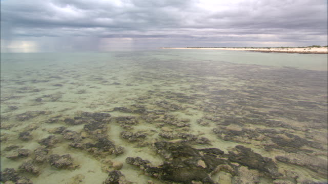 the clear water of shark bay shimmers over stromatolites along the shoreline. - shark bay stock videos & royalty-free footage