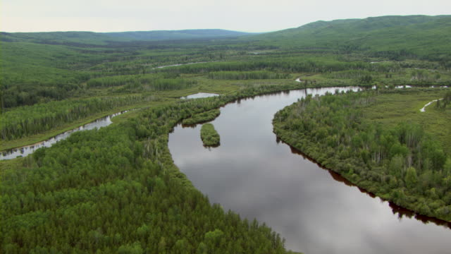 the clearwater river winds through a verdant boreal forest. - boreal forest stock videos & royalty-free footage