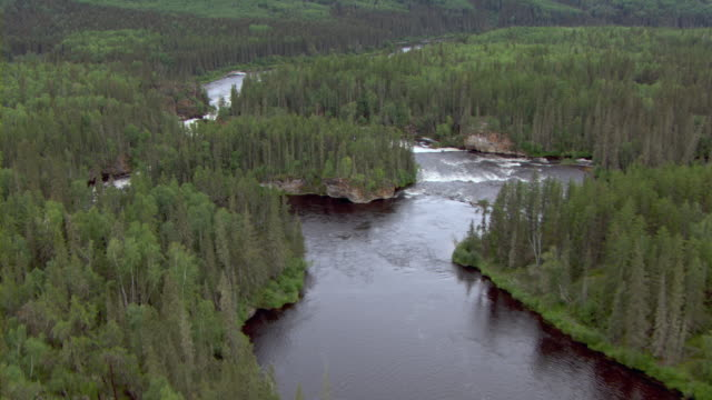 the clearwater river winds through a verdant boreal forest. - boreal forest stock videos and b-roll footage