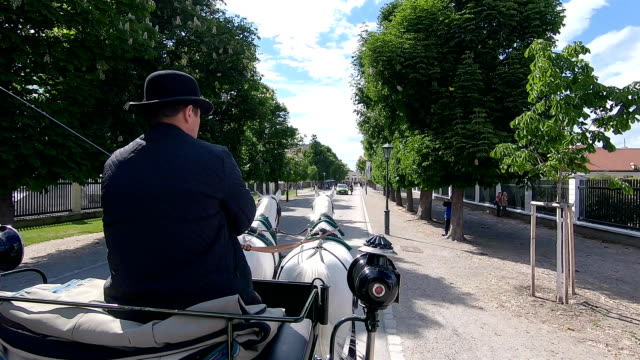 the coachman rides a carriage through the park. - vienna austria stock videos & royalty-free footage