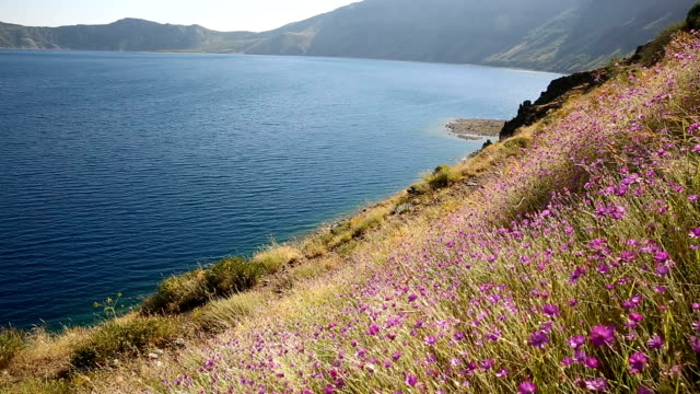 The colorful flowers are shaking in the wind in front of the Nemrut crater lake.