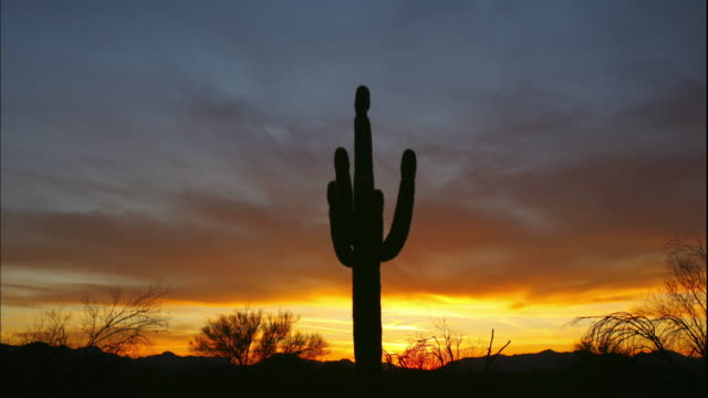 The colorful sky silhouettes a saguaro cactus in the desert.