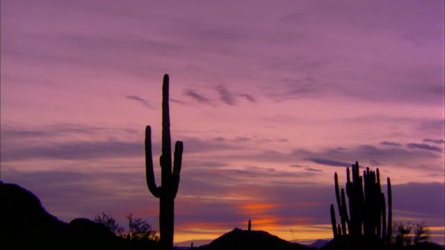 The colorful sky silhouettes cacti at Organ Pipe Cactus National Monument.