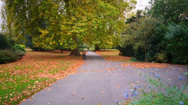vídeos de stock, filmes e b-roll de the colours of autumn in regents park london, uk. - parque regents