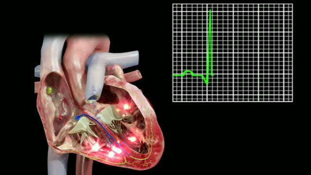 the conducting system of the heart - atrium heart stock videos & royalty-free footage