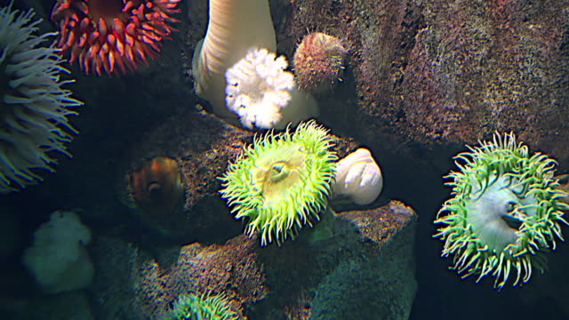 The Coral Reef Biodiversity, underwater image