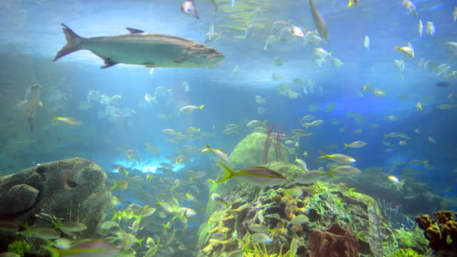 the coral reef section at ripley's aquarium located in the downtown district, in ontario, canada. - beauty in nature stock videos & royalty-free footage
