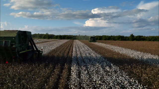 the cotton fields in mississippi, the united states - cotton stock videos & royalty-free footage