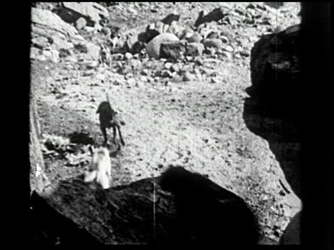 the cougar hunt - 12 of 13 - andere clips dieser aufnahmen anzeigen 2268 stock-videos und b-roll-filmmaterial