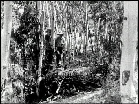 the cougar hunt - 5 of 13 - andere clips dieser aufnahmen anzeigen 2268 stock-videos und b-roll-filmmaterial