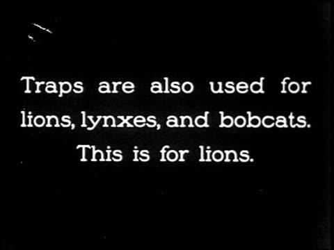 the cougar hunt - 7 of 13 - andere clips dieser aufnahmen anzeigen 2268 stock-videos und b-roll-filmmaterial