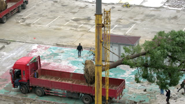 the crane was hoisting trees onto the truck - hoisting stock videos & royalty-free footage