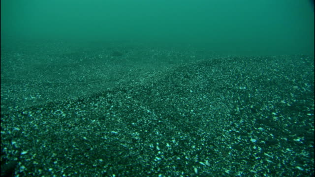 stockvideo's en b-roll-footage met the current of the pacific ocean creates a wave in the sand over the seabed. - getijde