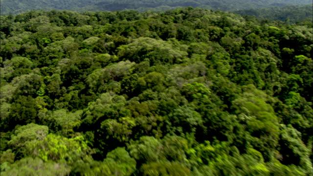 the daintree rainforest spreads across the coastal hills. - rainforest stock videos & royalty-free footage