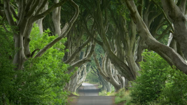 vídeos y material grabado en eventos de stock de the dark hedges, antrim ireland - irlanda del norte