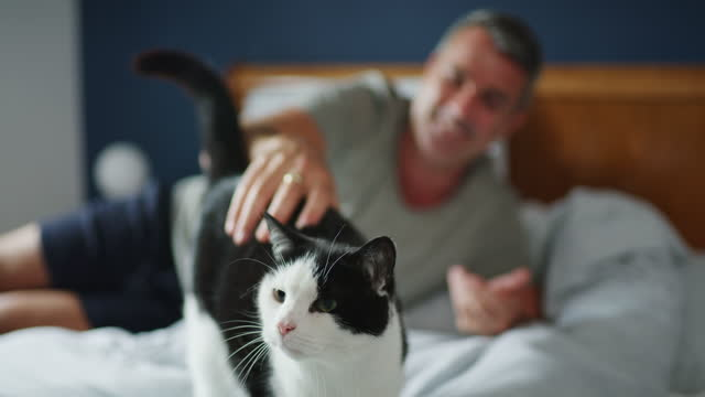 the day doesn't start until kitty gets her cuddles - mature men stock videos & royalty-free footage
