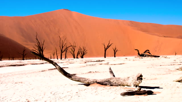 ws the dead vlei - natural landmark stock videos & royalty-free footage