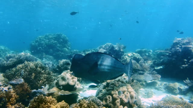 the deeper the ocean the more unique the fish - parrotfish stock videos & royalty-free footage
