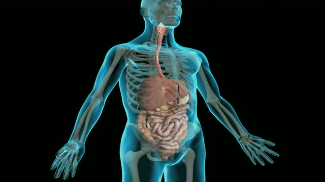 the digestive system - ileum stock videos & royalty-free footage
