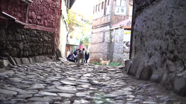 vídeos de stock, filmes e b-roll de o cão está funcionando à câmera no cobblestone - arcaico