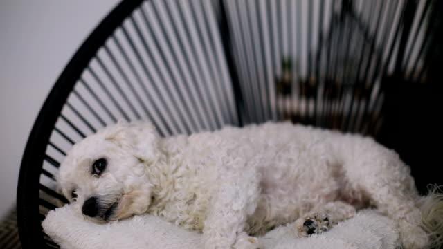 Der Hund schläft auf dem Stuhl