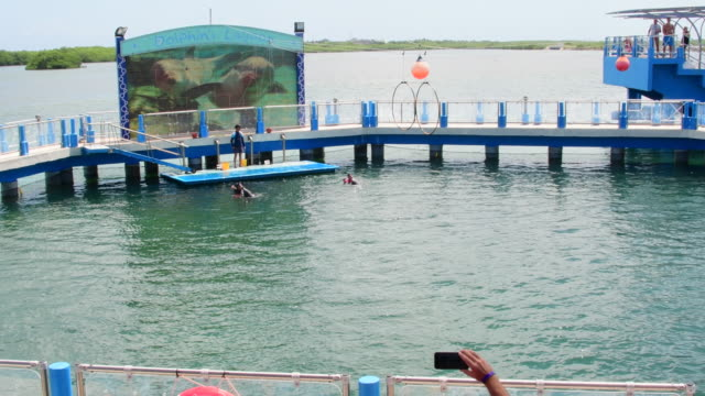 the dolphins lagoon offers dolphin shows of trained animals to the visiting tourists in the caribbean island. no audio - cetacea stock videos & royalty-free footage