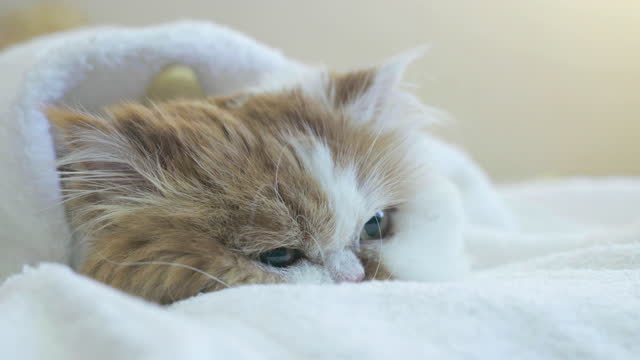 the domestic cat lies on the bed. - wrapped in a towel stock videos & royalty-free footage
