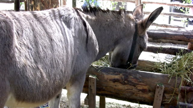 the donkey - 2008 stock videos and b-roll footage