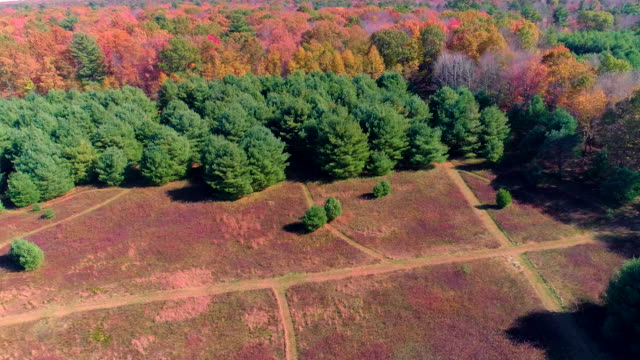 the drone aerial view on the paths in the field surrounded by the forest in poconos, pennsylvania. - pinaceae stock videos & royalty-free footage