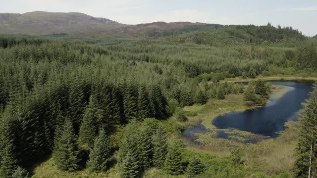the drone view of part of a small scottish loch in an area of forest in dumfries and galloway, south west scotland - galloway scotland stock videos & royalty-free footage