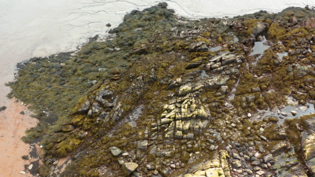 the drone view of seaweed on rocks at low tide on a beach in dumfries and galloway - low tide stock videos & royalty-free footage