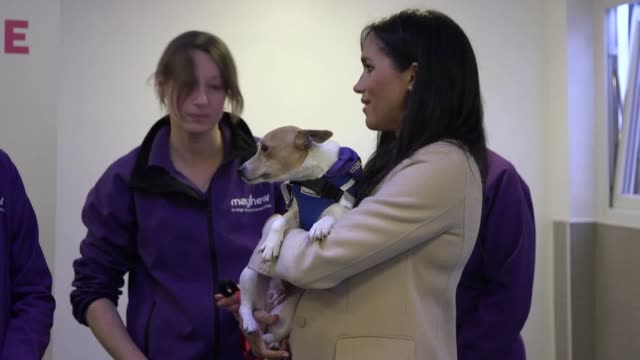 The Duchess of Sussex has met staff at the animal welfare charity she now supports as patron Meghan visited the headquarters of Mayhew which works to...