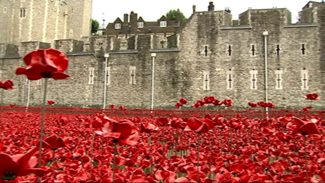 the duke and duchess of cambridge and prince harry open tower of london installation england london tower of london ext pan across 'the blood swept... - tower of london stock videos & royalty-free footage