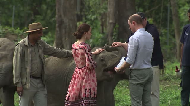 the duke and duchess of cambridge have been to see endangered rhinos and elephants on a safari during their official tour of india shows prince... - safari india stock videos and b-roll footage