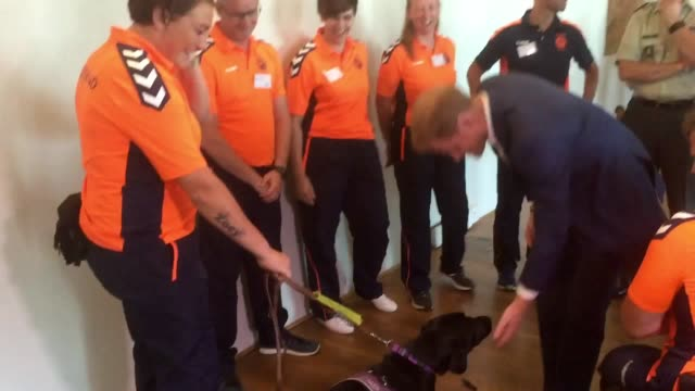 the duke of sussex could not resist the attentions of an exsoldier's friendly dog when he met members of the netherlands' invictus games team on... - duke of sussex stock videos and b-roll footage