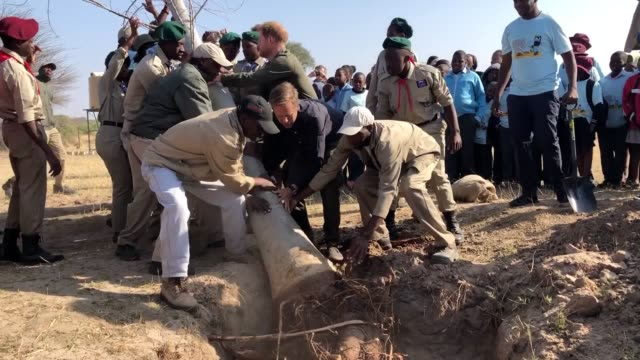 vidéos et rushes de the duke of sussex during a tree planting event with local children, at the chobe national park, botswana. he helped plant a large baobab tree as... - botswana