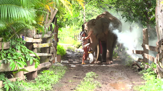the elephant farmer is splashing water on the elephant. to bathe the elephants at a creek in the countryside represents the way of life of the elephants love, the bond of people with elephants. - exoticism stock videos & royalty-free footage