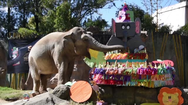 The elephant Trompita celebrates her 57th birthday with a cake made of vegetables and fruit at the Aurora zoo in Guatemala City