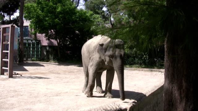 stockvideo's en b-roll-footage met the elephant - zoogdier