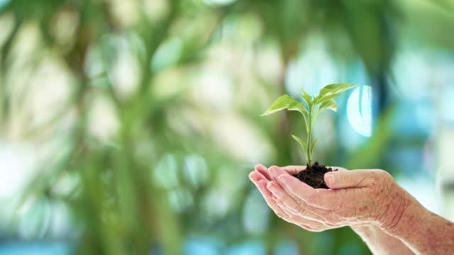 vídeos y material grabado en eventos de stock de el medio ambiente es preocupación de todos - estilo de vida sostenible