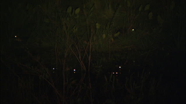 the eyes of caimans glow in a the beam of a spotlight. - glowing stock videos & royalty-free footage