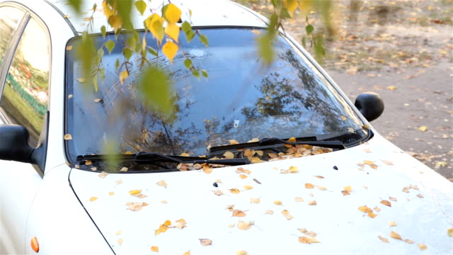 the fallen leaves of the birch on a white car. - stationary stock videos & royalty-free footage