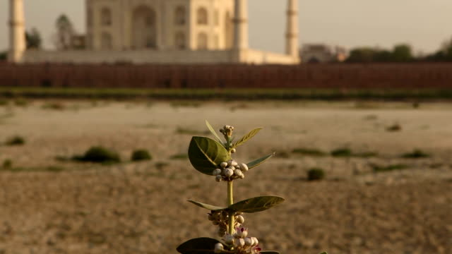 the famous taj mahal in agra, india - mausoleum stock videos and b-roll footage