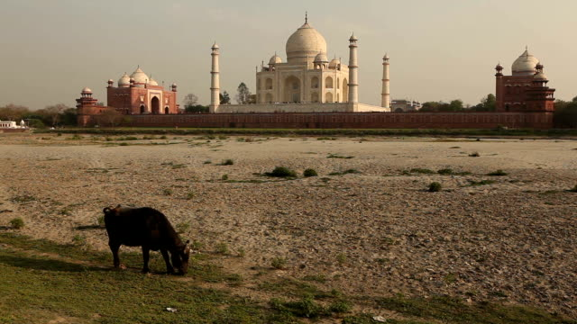 the famous taj mahal in agra, india - agra stock videos and b-roll footage
